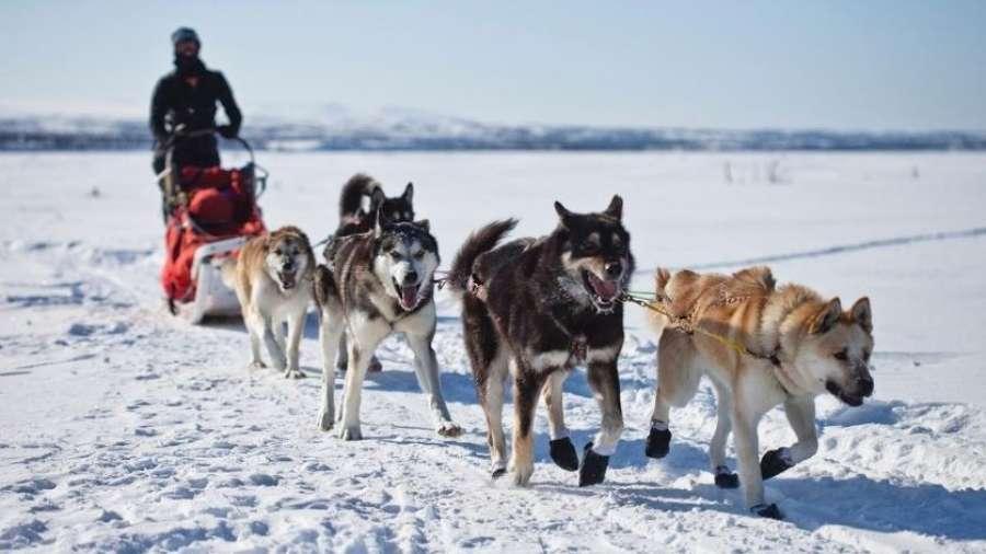 Polardistans 2021. Чемпионат мира на длинные дистанции